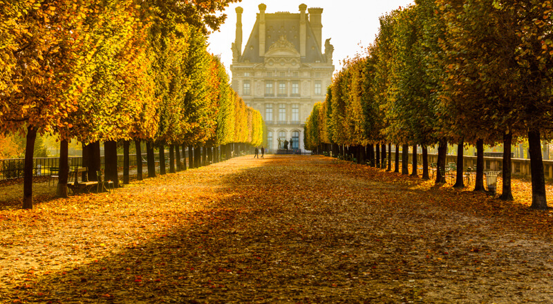 Golden fall foliage in Tuileries Garden in October