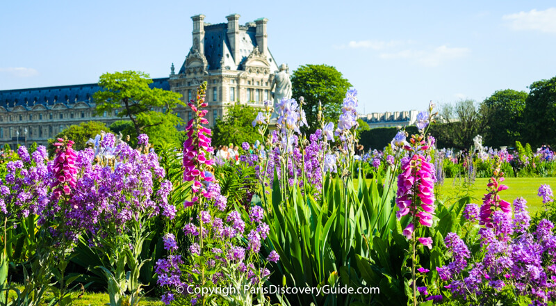 Foxglove, iris, and other flowers blooming around Mother's Day in Tuileries Garden across from the Louvre in Paris