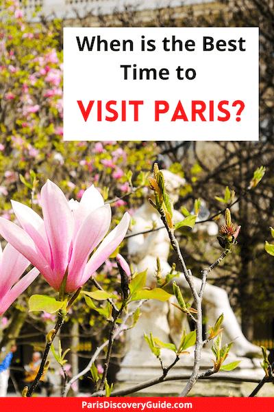 Magnolias in bloom in Palais Royal Garden in Paris