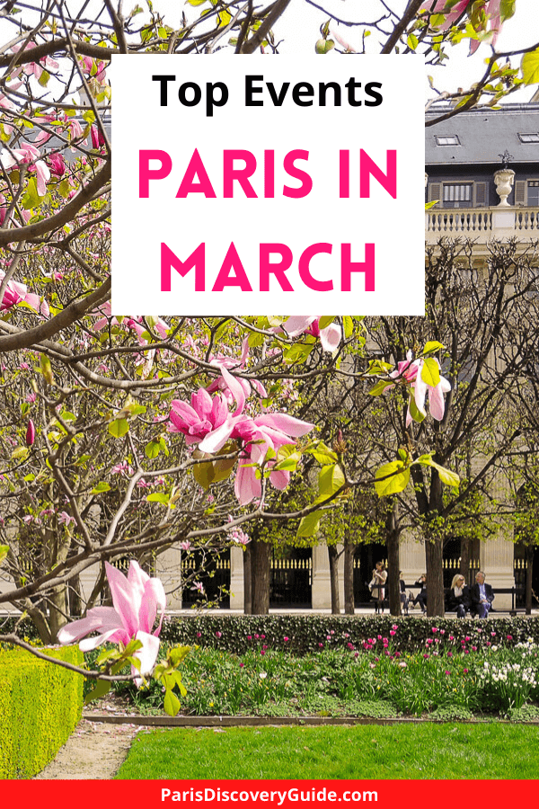 Magnolias blooming in Palais Royal Garden in March