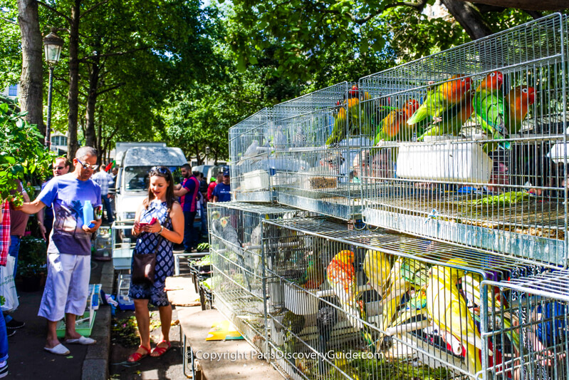 Marché des Fleurs becomes a bird market on Sunday mornings in Paris